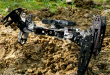Animal-like_robots_respond_in_minutes_to_injuries_and_obstacles