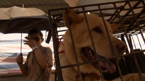 Dog lovers, dog meat connoisseurs clash at controversial Chinese festival