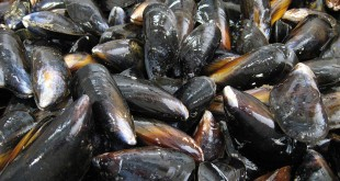 Shellfish ban in Pilar town still up