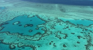 Many corals dead or dying on Barrier Reef: scientists