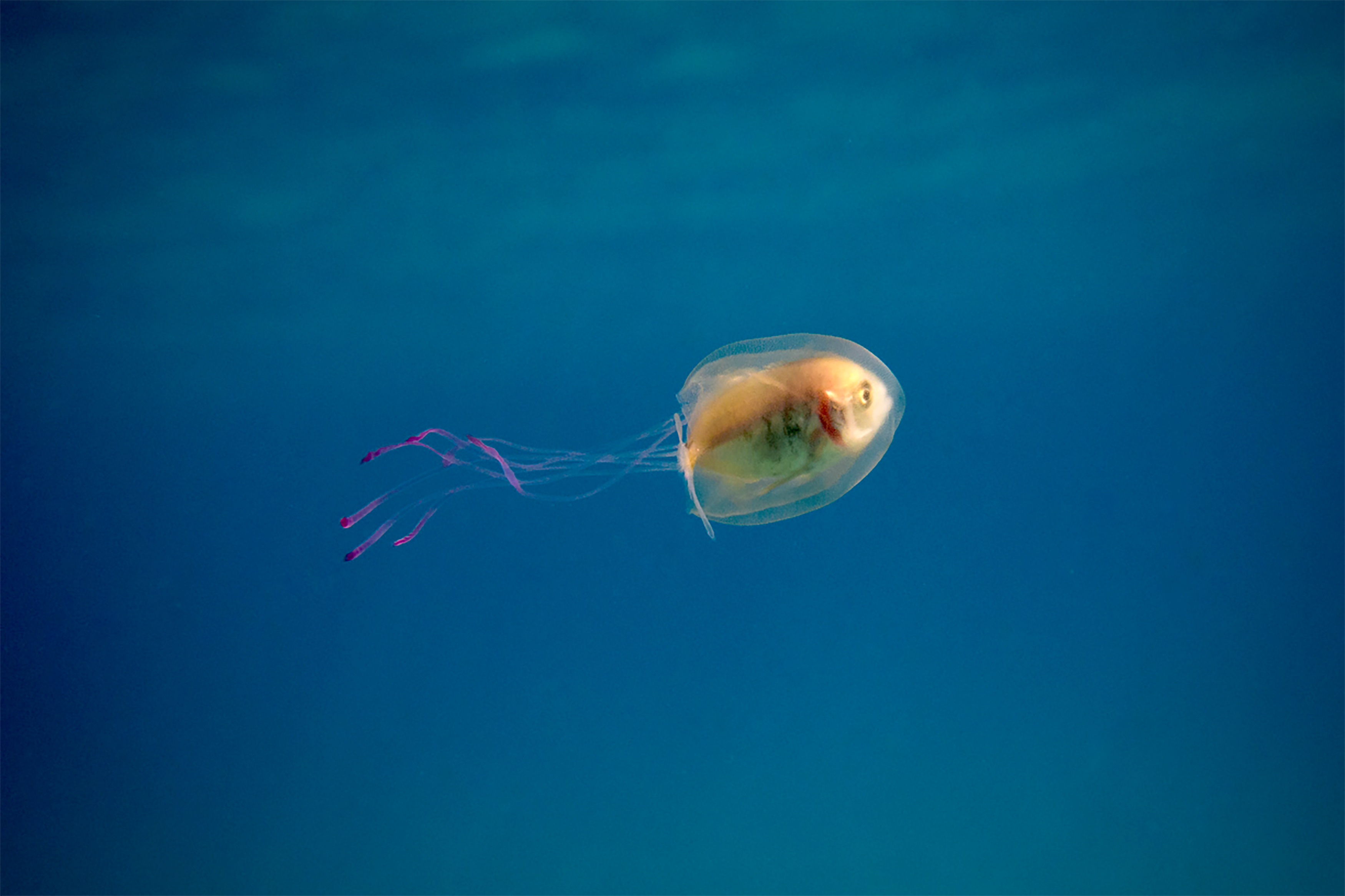 fish eyes life inside a jelly u0027s belly