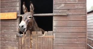 'Talking donkeys' entertain London