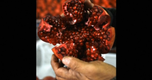 Pomegranates may help reverse muscle ageing, say researchers