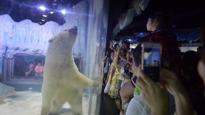 China aquarium refuses to deliver sad bear Pizza to UK