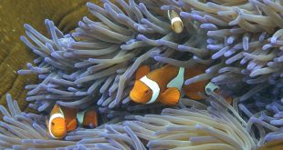 Coral fish stress out if separated from 'shoal-mates'