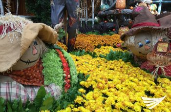 Fantastic flower displays at the Bellagio Botanical Gardens in Las Vegas