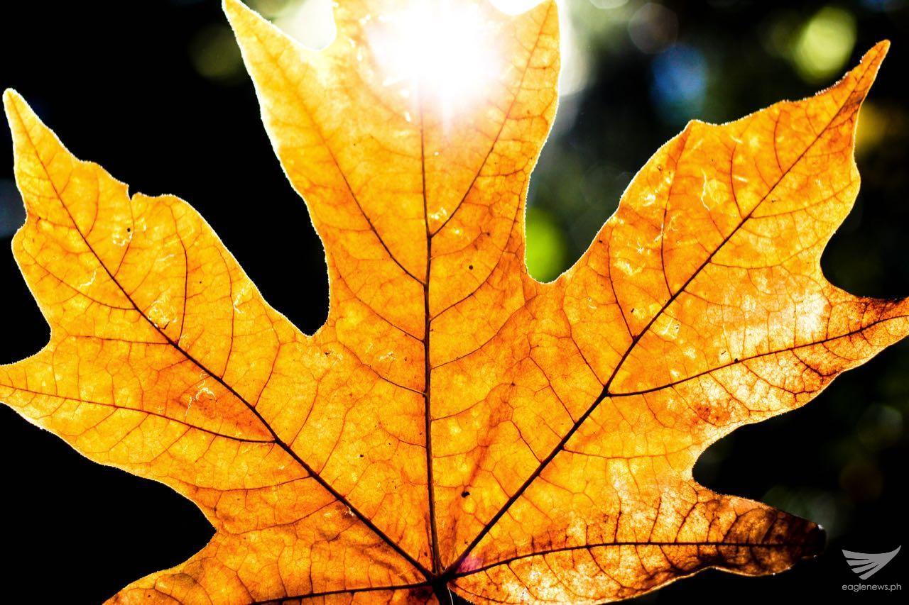 Changing colors of autumn. Photo by Aiesha Duazo (Eagle News Service Canada bureau)