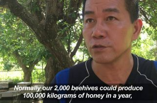 Taiwan beekeepers battle to cash in on pure honey buzz