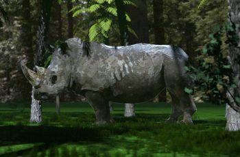 WATCH: Endangered species