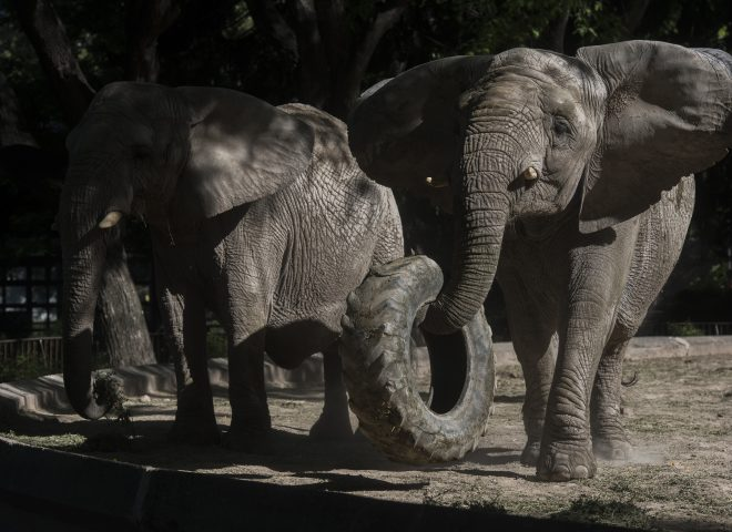 Buenos Aires Zoo accused of mistreatment of three elephants