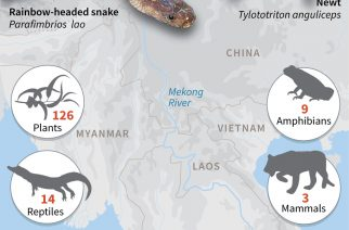 Graphic on new species discovered in the Mekong region, WWF said in a report Monday.