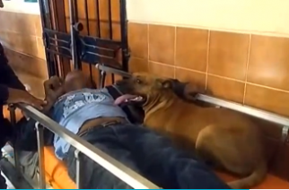 Chimbote man is forced to go to hospital after hitting his head, so his dogs decide to come along. (Photo was grabbed from Reuters video file)