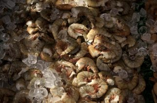 (FILES) This file photo taken on April 20, 2016 shows shrimp for sale at the Maine Avenue Fish Market in Washington, DC. The price of big-sized shrimp can rise as a direct result of pollution from fertilizers that cause dead zones in coastal waters, US researchers said on January 30, 2017. The study in the Proceedings of the National Academy of Sciences is the first to show how a low-oxygen water problem called hypoxia is related to the climbing price of seafood.  / AFP PHOTO / Brendan Smialowski