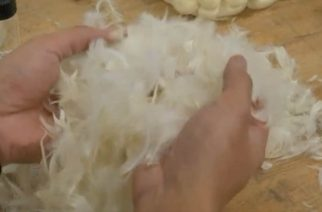 London-based start-up Aeropowder is developing a method to turn thousands of tonnes of waste chicken feathers into useful materials, including an effective thermal insulator. (Photo courtesy to Reuters video)
