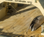 Australia disappointed by Japan's continued whale hunt in Southern Ocean