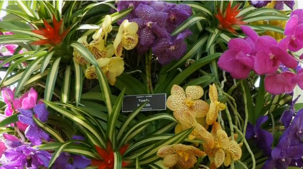 An Explosion Of Color At New York City 39 S Orchid Show