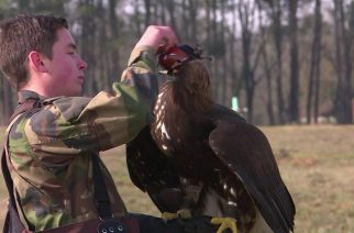 French army groom eagles to down drones
