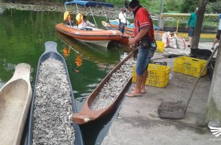 Lake Sebu nanatiling under state of calamity dahil sa fish kill