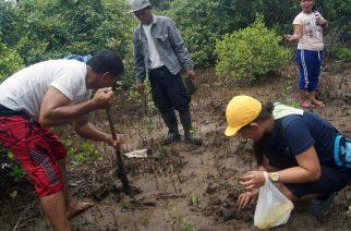 Mangrove planting isinagawa ng mga miyembro ng Iglesia Ni Cristo sa Isabel, Leyte