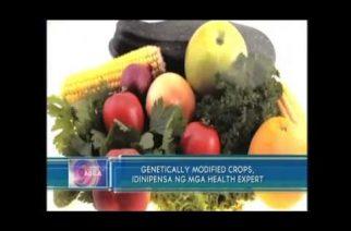 Genetically modified crops, idinipensa ng mga health expert