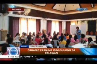 Organic farming isinusulong sa Palawan