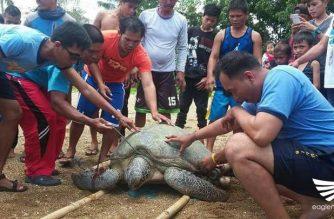 Malaking pawikan na-rescue sa Ipil, Zamboanga Sibugay