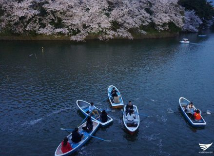 Boats along the Chidorigafuchi moat in Tokyo, Japan where cherry trees are in bloom. (Photo by Fleur Amora, Eagle News Service)
