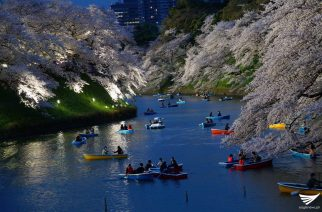 Cherry blossoms along the Chidorigafuchi moat in Tokyo, Japan.   (Photo by Fleur Amora, Eagle News Service)