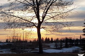 A tree is starkly etched with the background of a dramatic sunset.  Photo taken in Edmonton, Canada (Photo by Dale Daza, EBC Canada)