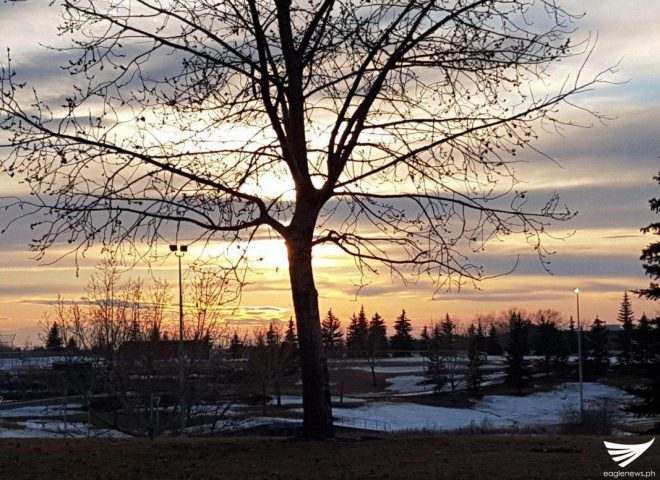Featured photo:  A tree as the sun sets in Edmonton, Canada