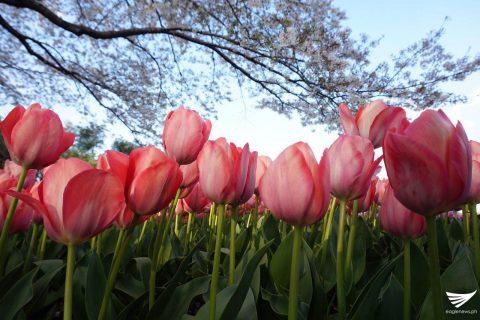 (Photo by Fleur Amora, Eagle News Service, Japan)