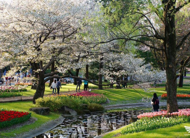 Featured photos:  Flower power at the Showa Kinen Park in Japan attracts tourists