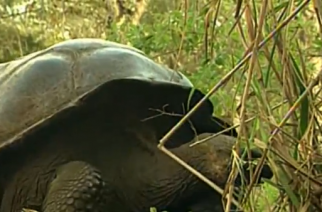 Wildlife experts inspect health of rare Galapagos tortoises recently rescued from traffickers