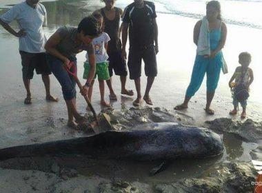 Na-stranded na marine mammal, na-rescue sa Puerto Princesa City