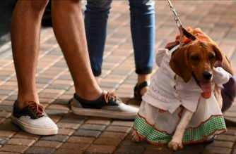 Dogs dress up for costume contest in El Salvador