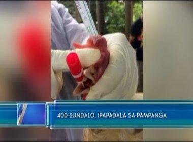 400 sundalo, ipapadala sa Pampanga para tumulong sa pagpatay ng mga manok na apektado ng bird flu