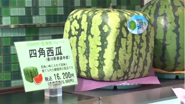 Outlandish square watermelon gaining popularity in japan - Square watermelons how and why ...