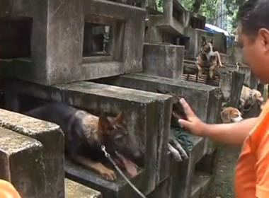 Filipino volunteers and dogs in MMDA K9 Center Training Center (Photo grabbed from Reuters video)