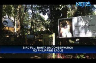 Finance chief worried about bird flu's effect on endangered Philippine Eagle
