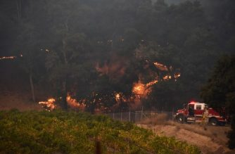 Firefigherts protect a vineyard in Santa Rosa, California, October 11, 2017 as the toll from Northern California wildfires continues to grow. More than 200 fire engines and firefighting crews from around the country were being rushed to California on Wednesday to help battle infernos which have left at least 21 people dead and thousands homeless. / AFP PHOTO / Robyn Beck