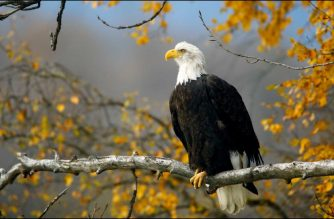 YOUNG VOICES SPEAK: Characteristics of an eagle that a leader should possess