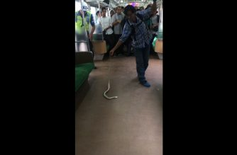 An Indonesian man kills a snake with his bare hands while inside a train.  (Photo grabbed from Agence France Presse TV video)