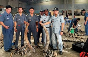 This picture taken on December 5, 2017 shows Cambodian authorities holding pieces of ivory after a shipment was seized in Preah Sihanouk province.  Cambodia has seized nearly a tonne of ivory hidden in hollowed-out logs and discovered inside an abandoned shipping container, an official said on December 6. / AFP PHOTO / Suon Vin