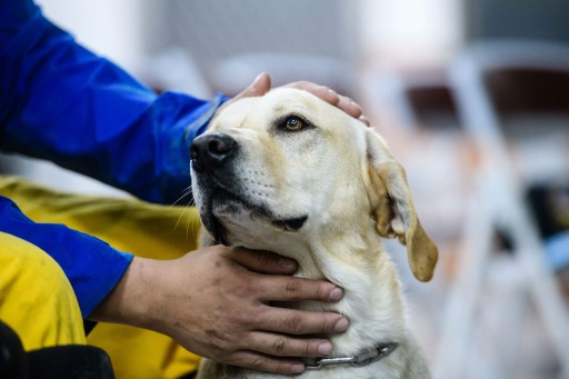International Dog Rescue Taiwan