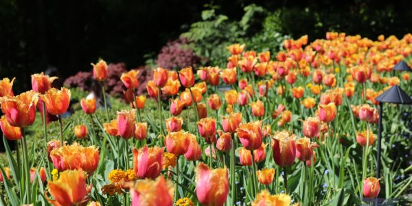 #EBCphotography:  Colorful flowers beckon visitors of Butchart Gardens in Canada