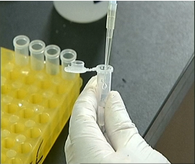 Research done on the Ebola virus and the experimental drug ZMapp.  (Photo grabbed from CCTV/Reuters video)