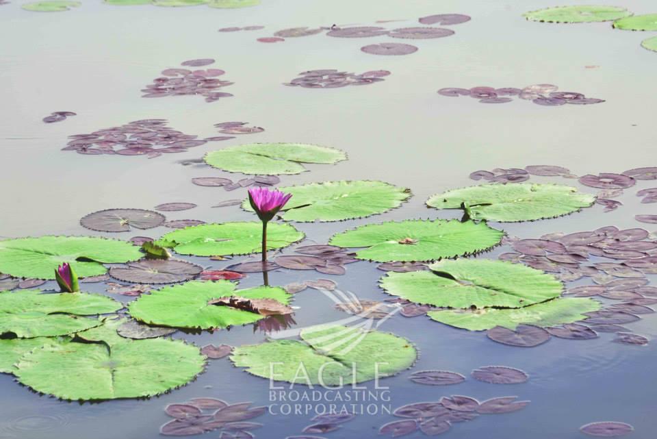 The Candaba Wetlands - a bird watcher's paradise