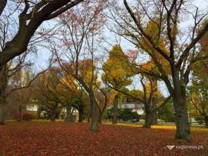 Autumn in Kyoto, Japan.  Photo taken by Fleur Amora  (Eagle News Service)