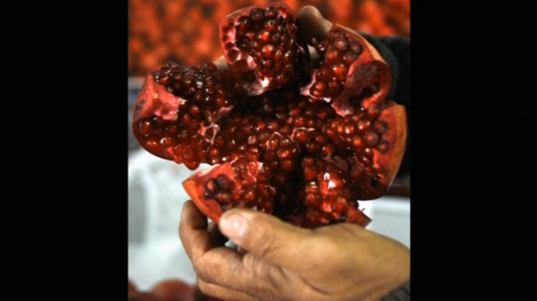 Tests on worms and mice have shown that intestinal bacteria transforms a molecule contained in pomegranates to dramatically slow down the ageing of muscles. Scientists from Swiss research institute EPFL have established a start-up company, Amazentis SA, to develop their research into a medicine to help counteract age related muscle decline. (Photo  captured from Reuters video)