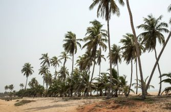 A picture taken on January 11, 2017 shows palm trees on a beach outside the small coastal town of Ouidah, some 40km from Cotonou.  With its beaches, a remarkable historical heritage and its animal parks, Benin has nothing to envy the most beautiful African destinations... except their number of tourists. Only 200.000 tourists visited the country in 2014-2015 (the last numbers available).  / AFP PHOTO / STEFAN HEUNIS